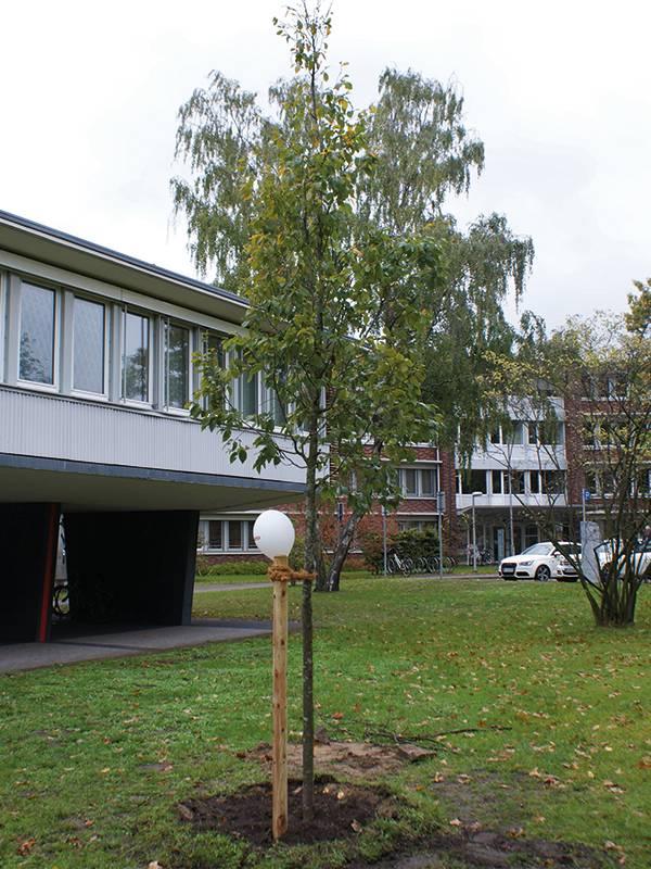 Einheitsbaum