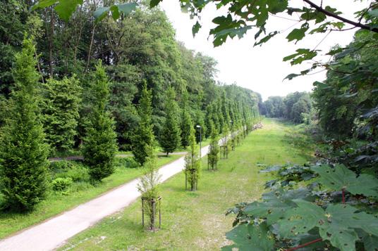 Das Bild zeigt den Wittringer Wald