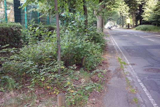 Das Bild zeigt die Konrad-Adenauer-Allee
