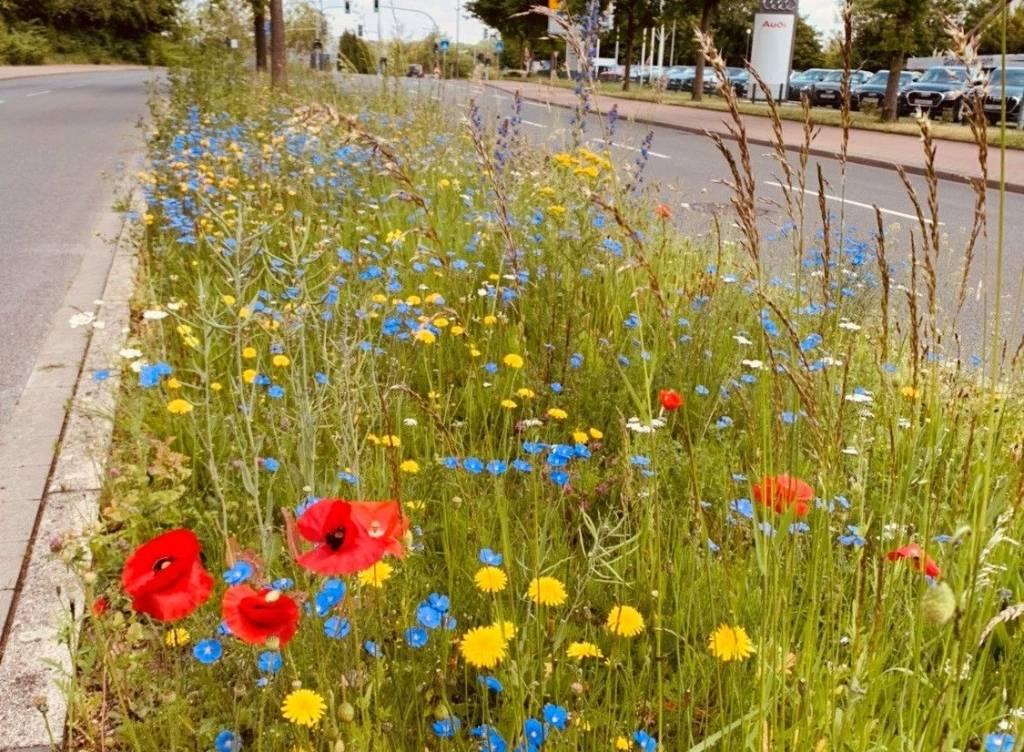 Pressefoto Für Bienen und andere Insekten ein Segen, für Autofahrer und Passanten ein echter Hingucker: Auf dem Mittelstreifen an der Kurt-Schumacher-Allee blühen die bunten Blumen. Foto Stadt RE