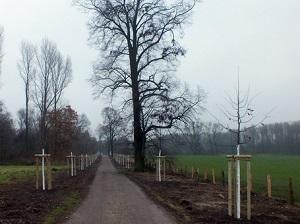 Neu gepflanzte Bäume