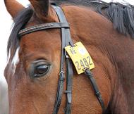 Reitkennzeichen an Pferdetrense