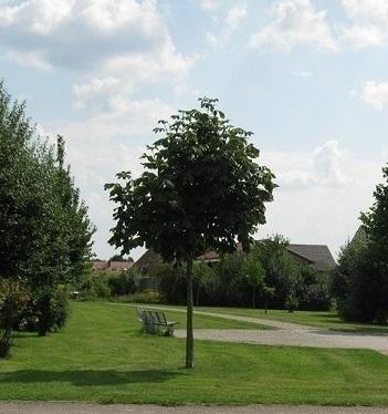 Baum im Stadtbild