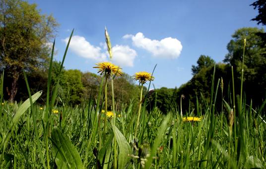 Das Bild zeigt die Gladbecker Umwelt