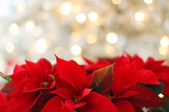 Weihnachtsmarkt und Turmblasen: Angebot in der Innenstadt zum Jahresende