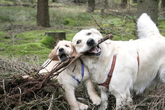 Das Bild zeigt zwei Hunde