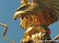 Titelbild Adler - Foto von Hans-Werner Berg