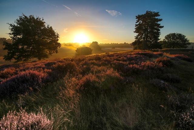 Westruper Heide- Foto der Stadtagentur