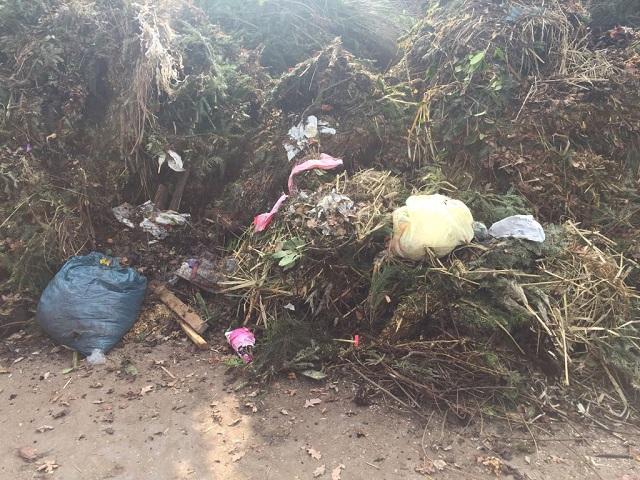 Die Stadtverwaltung bittet, die Grünen Tonnen richtig zu befüllen.