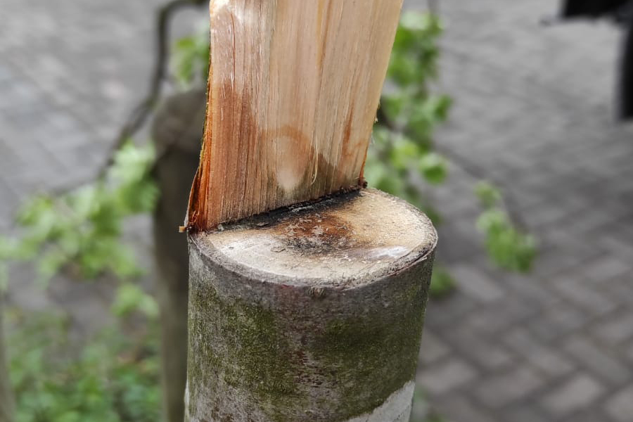 Angeschnittener Baum