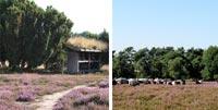 Bildkollage Westruper Heide