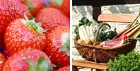 Bildkollage Hofläden mit Bild von frischen Erdbeeren und Einkaufskorb mit Landprodukten
