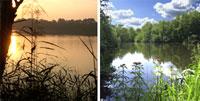 Bildkollage Impressionen von Seerosenteich und Vogelvennteich