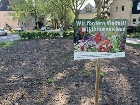 Der Blühstreifen am Drissenplatz.