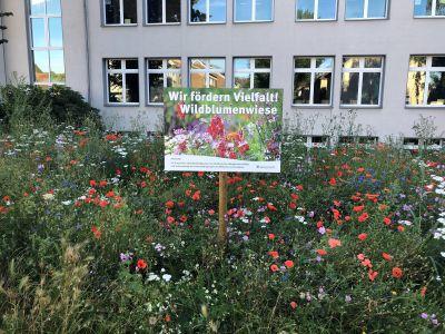 Überall im Stadtgebiet verteilt erblühten Wildblumen auf den Blühstreifen. Fotos: Stadt RE
