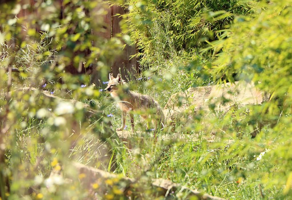 Ein negativer Schnelltest ist keine Zutrittsvoraussetzung für den Tierpark mehr. Foto: Stadt RE