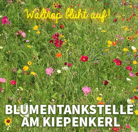 Auf dem Bild: Blumenwiese. Text im Bild: Blumentankstelle am Kiepenkerl.