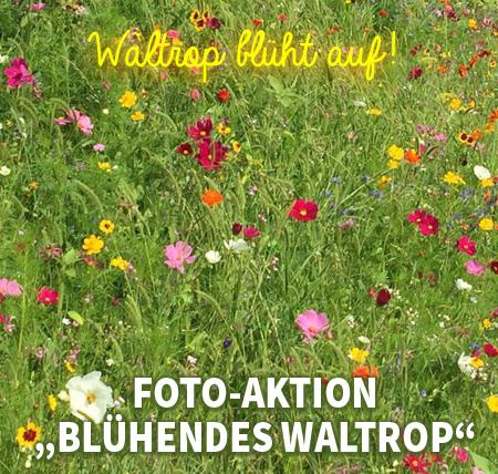 """Auf dem Bild: Blumenwiese. Text im Bild: Waltrop blüht auf. Foto-Aktion """"Blühendes Waltrop""""."""